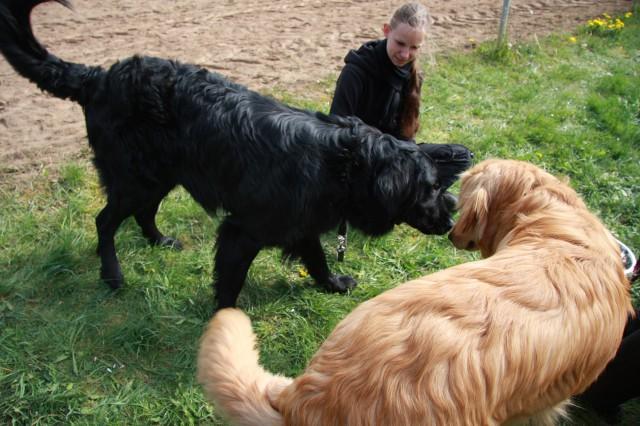 Ein vorsichtiges Kennenlernen zwischen Donald und Dima aus dem Bargmoor