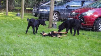 Bonnie, Casey und Jule (Bella)