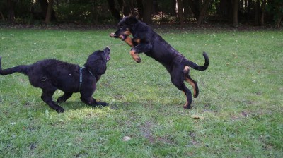 Birka und Casey