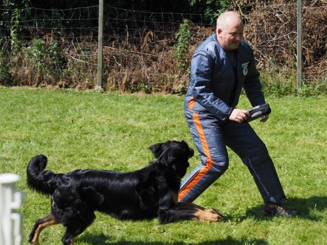 Casey im Spiel mit dem Körhelfer Holger Grewe.